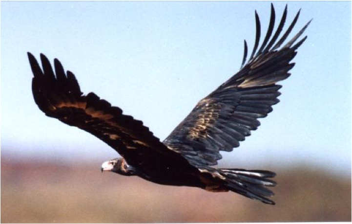 Eat Roadkill or Soar like an Eagle? (2/2)