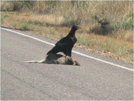 Eat Roadkill or Soar like an Eagle? (1/2)