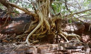 treeroots copy